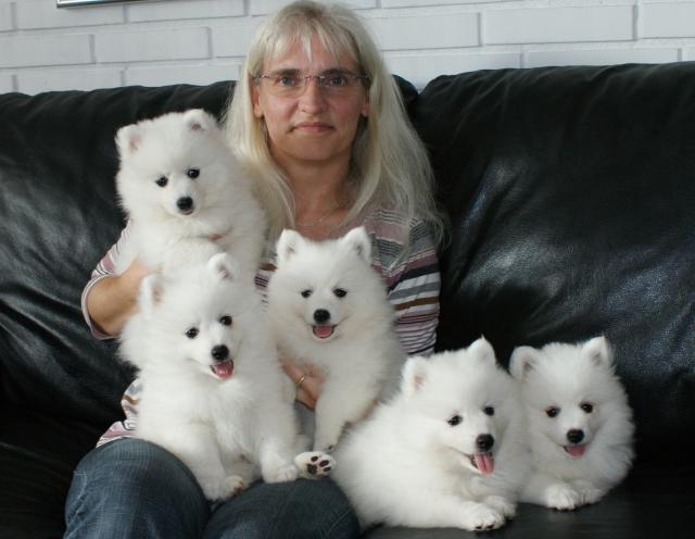 billige hundehvalpe til salg sjælland